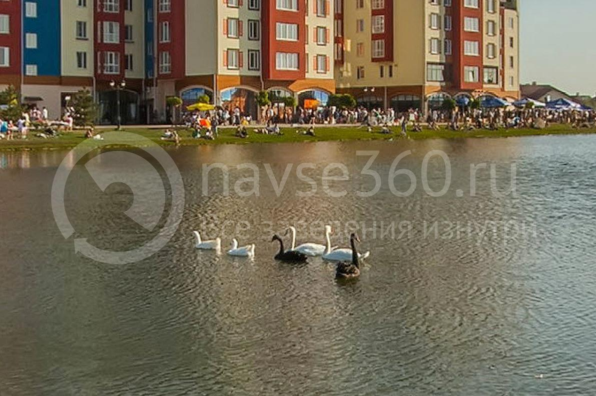 Oktoberfest 2015, Краснодар, Немецкая деревня, лебеди