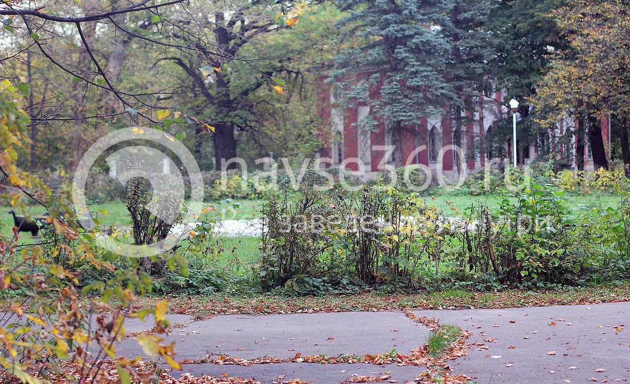 парк усадьбы петровское