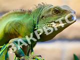 Избариум, экзотариум и выставка-продажа аквариумных рыб и рептилий