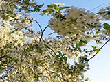 Весна в Таганроге