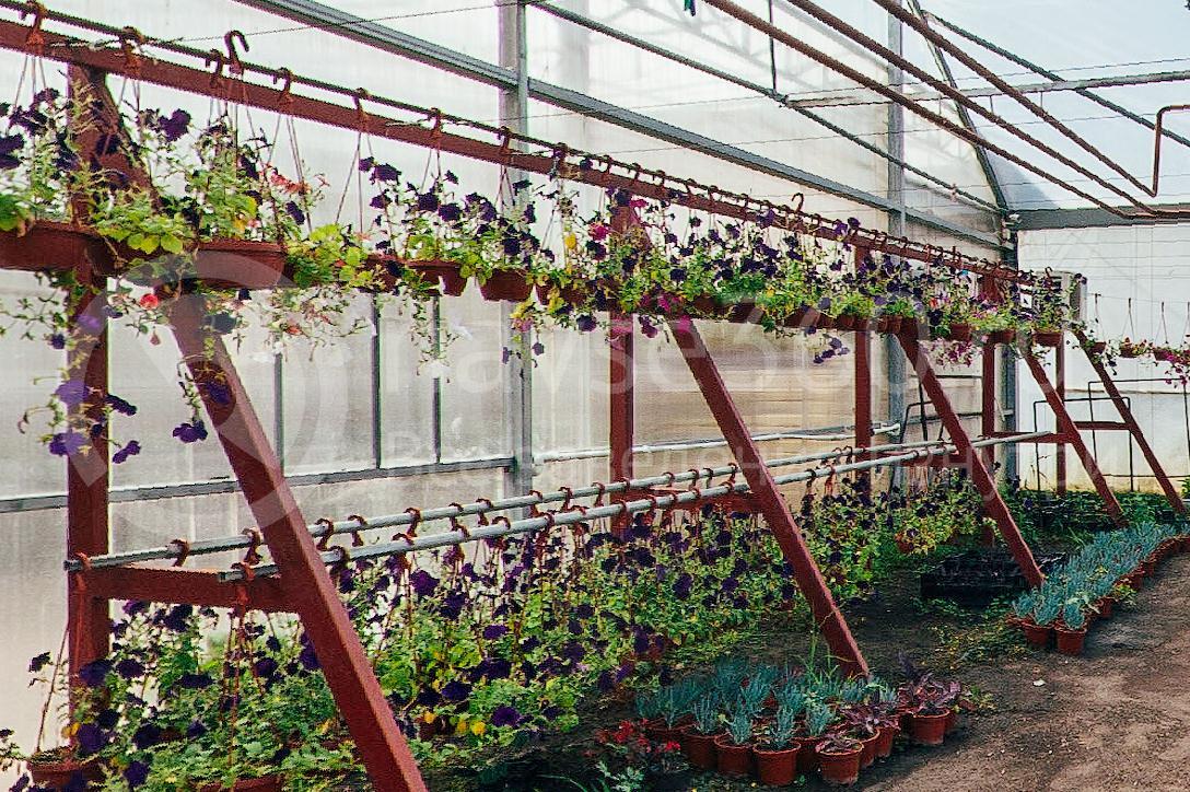 совхоз цветочный, рассада оптом краснодар 18
