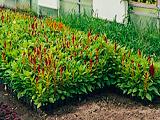 Совхоз цветочный, питомник