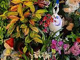 Александровский Сад, салон цветов