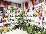 Диантус на Новой, цветочный магазин