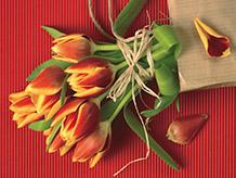 Живые тюльпаны от Флора Стиль