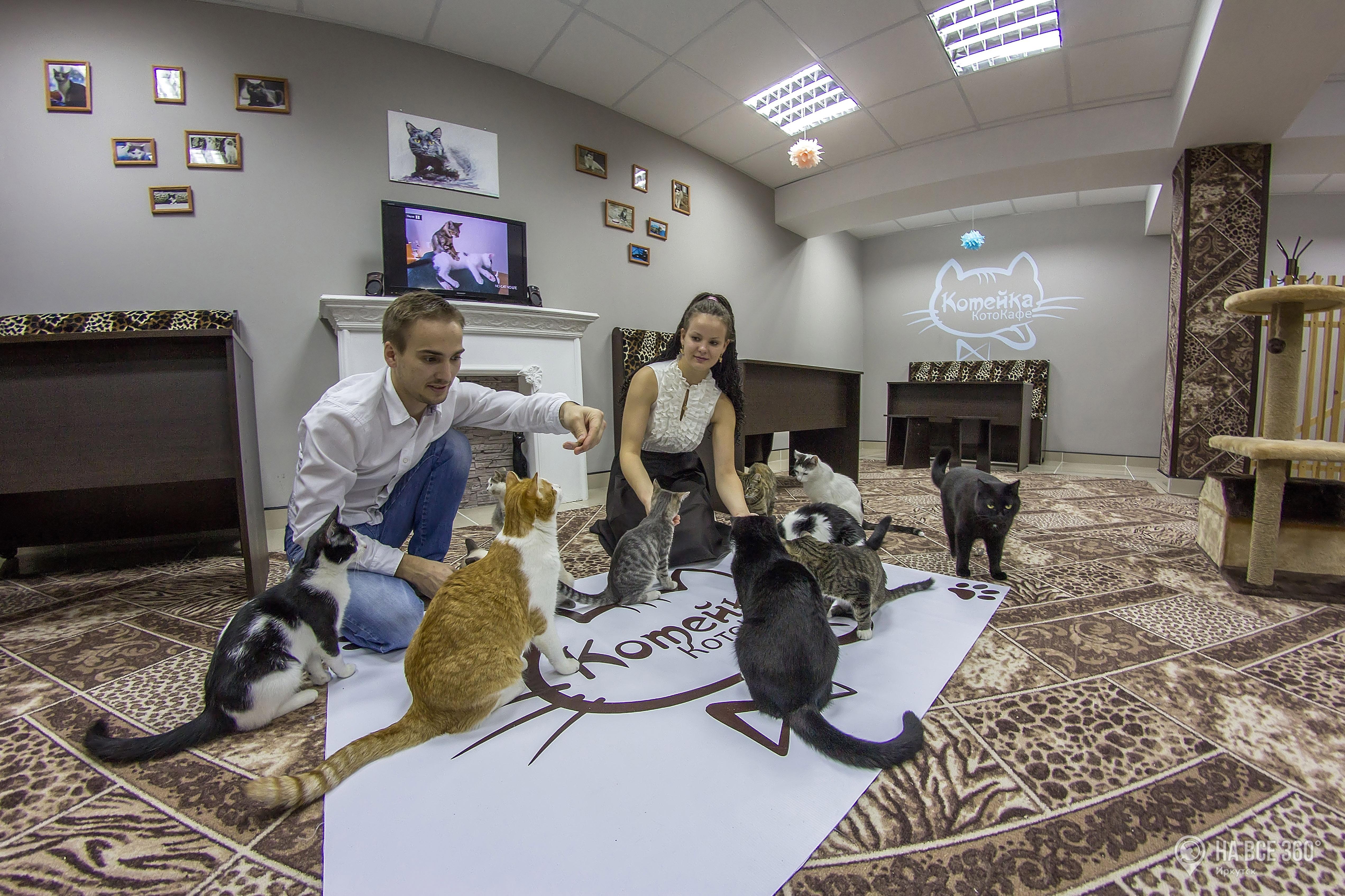 Котокафе в Иркутске