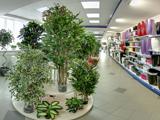 Кашпо и исскуственные деревья, магазин